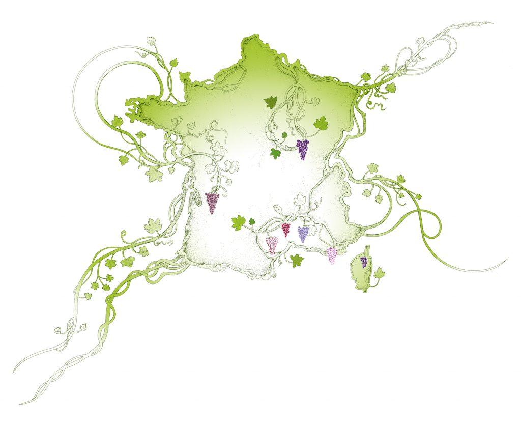 Illustrations de Lotie pour les Vins d'Alsace